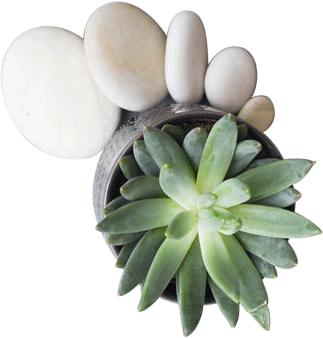 Plante grasse et galets blancs